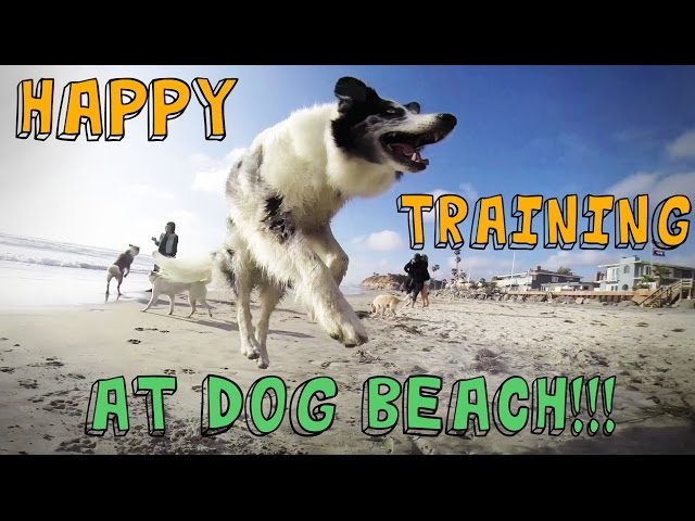 Dog Tricks and Training at DOG BEACH