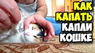 Как капать капли кошке || Стоматология Алексенберга || Стрижка на Автозаводской || В гостях у сестры