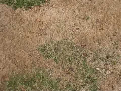 round 2 preemergent video lawn care