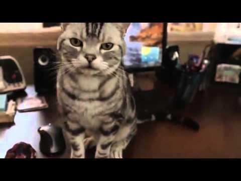 Iams Cat Food Commercials