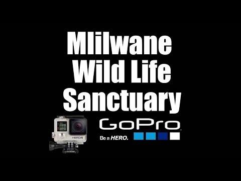 Mlilwane Wild Life Sanctuary, Swaziland  | Go Pro 4 Silver | Virtual Trip