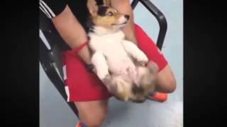 Cười rụng răng với clip hài hước của những chú thú cưng