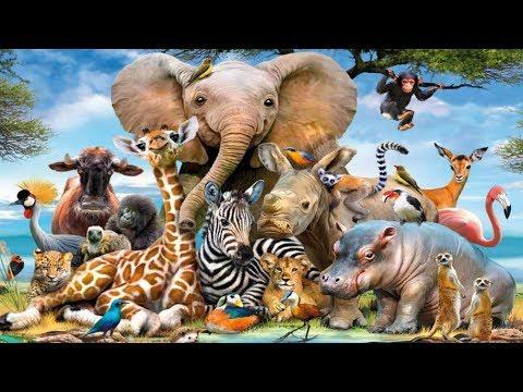 Учим  Животных Из Джунглей Развивающий Мультик Для Детей