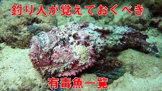 【釣り人が覚えておくべき 有毒魚一覧】 「毒のある危険生物」魚・水生生物一覧