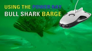 Underwater drone at the Bull Shark Barge, Power Ray