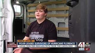 80 dogs rescued from Hurricane Florence up for adoption in Mission, KS