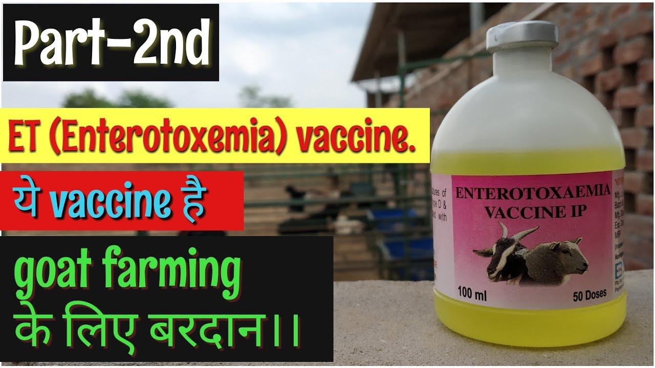 ET(enterotoxemia) Vaccine in goats  goat farming in hindi  bakri paln
