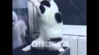 Женщина я не танцую кот)))