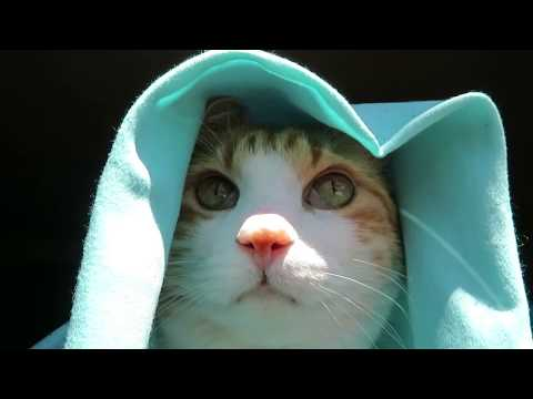 Cat Enjoy Fresh Air Wearing A Cape