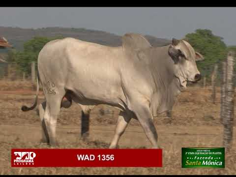 LOTE 30 - WAD 1356