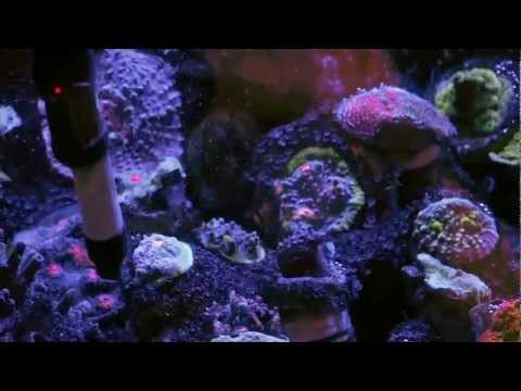 Mike paletta 39 s 300 gallon reef 2 reefkeeping video by for Starting a saltwater fish tank