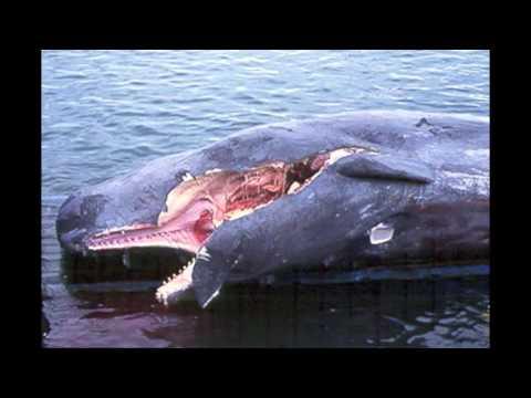 Case Study Blue Whale ESS