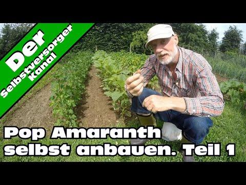 Popp Amarant selbst anbauen. Die Aussaat