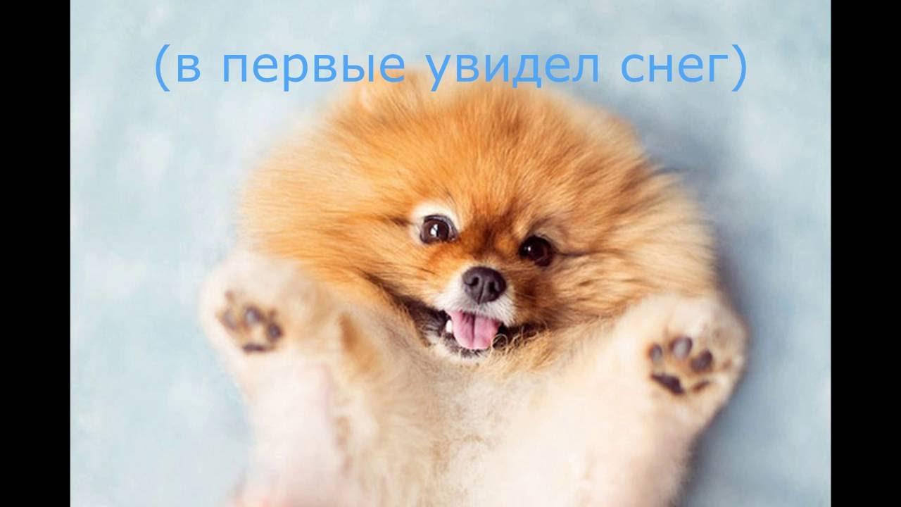 самые милые собачки в мире фото