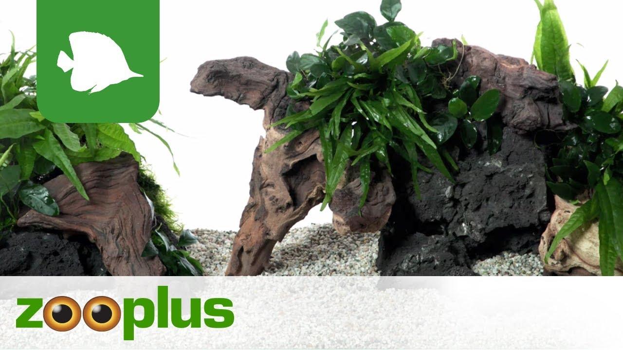 Mopani Wurzel Aquarium Dekoration Zooplus Youtube