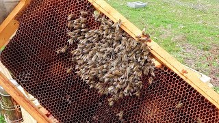 Beekeeping Winter Losses