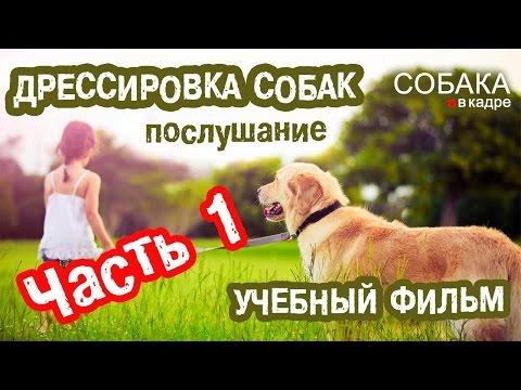 Дрессировка собак. Послушание (Часть 1).