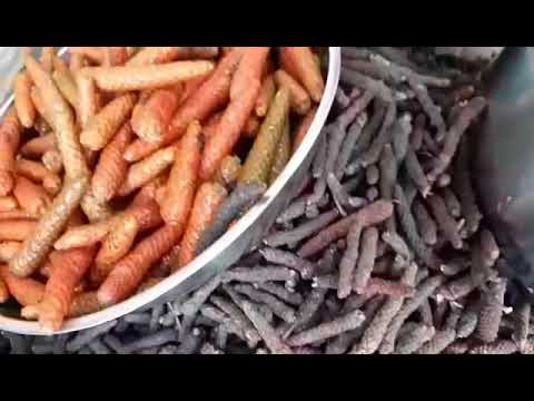 Tiêu lốp( tiêu lốt) khô - tươi giá rẻ giảm 20% lh 0984533646