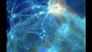 Plasma Universe, Time Traveler, Cosmic Rays | S0 News Oct.30.2020