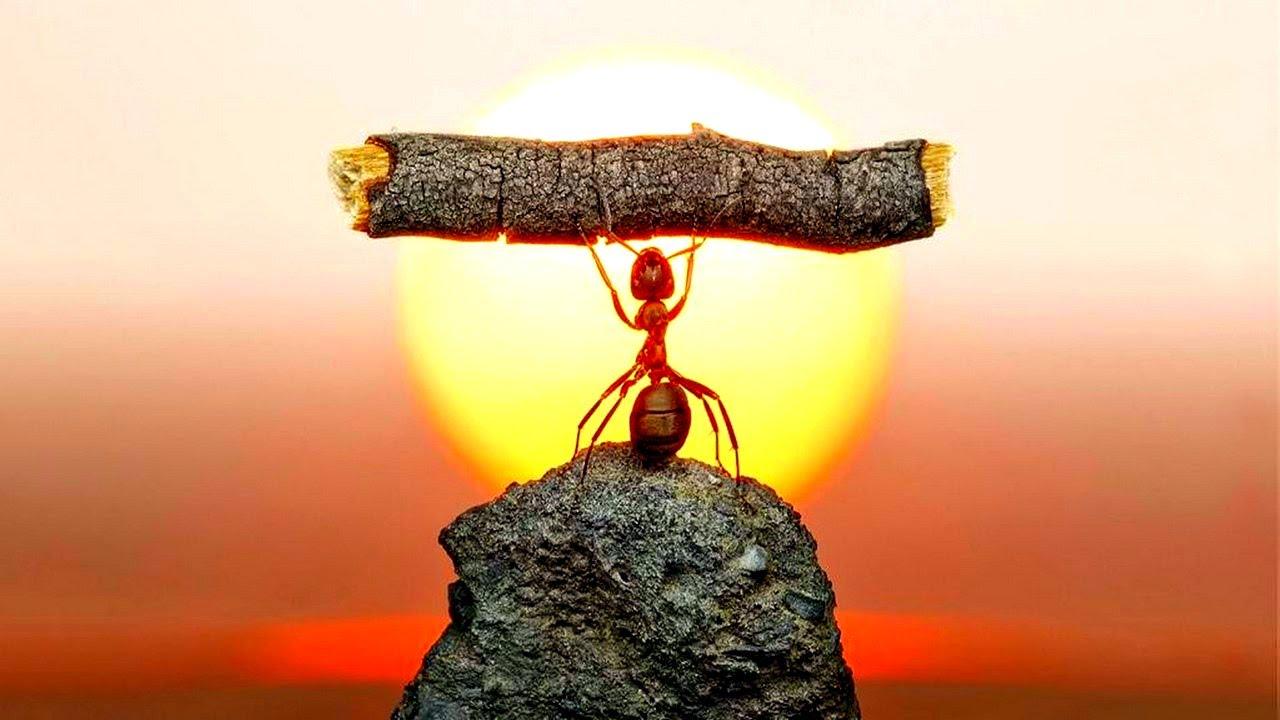 муравьи к чему сахаре в снятся