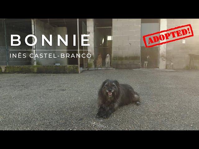 Eu sou a BONNIE