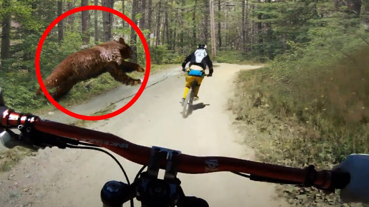10 Scariest Recent Animal Encounters!