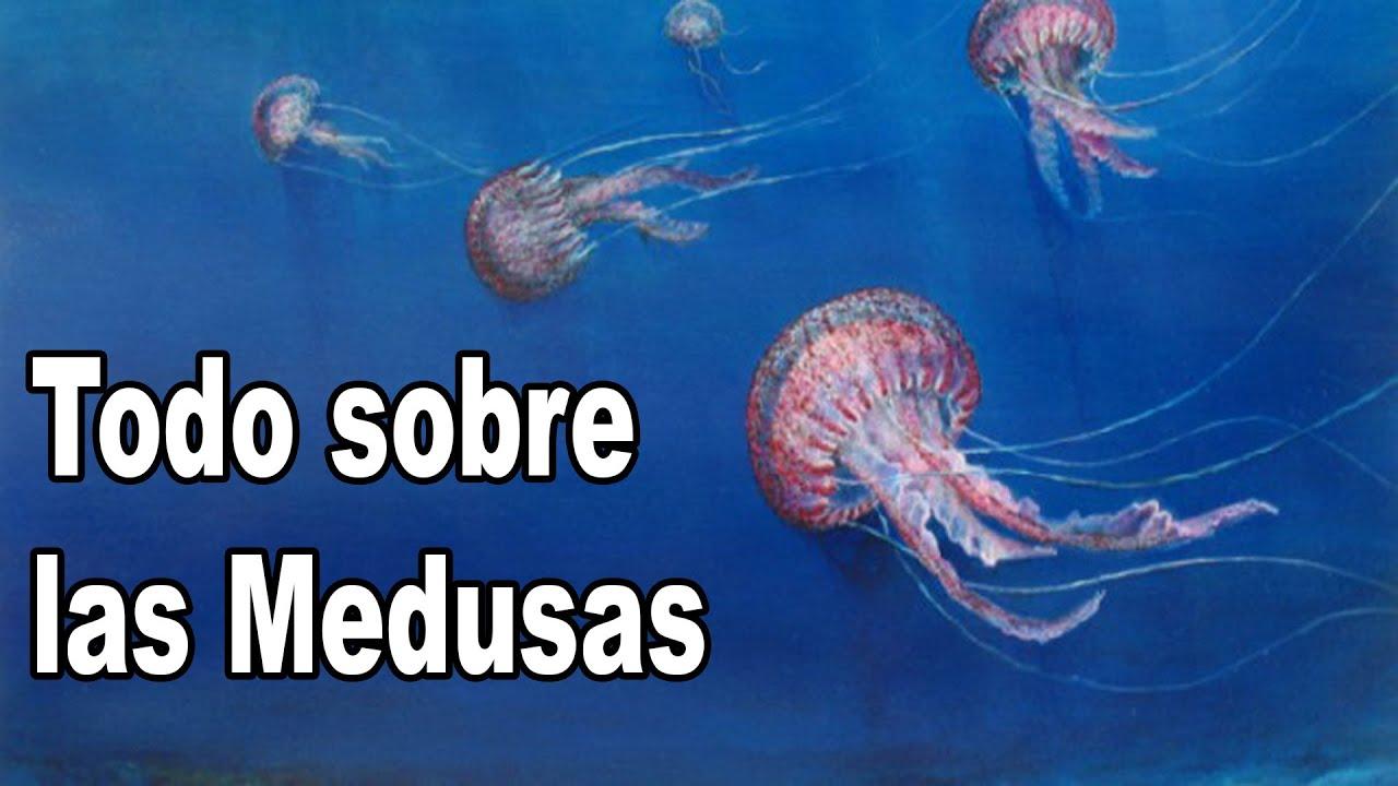 Medusas datos y curiosidades youtube - Como se alimentan las medusas ...