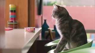 Позитивная реклама с кошками