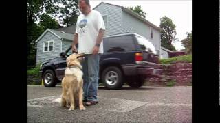 In Home Southwest Florida Dog Training - Obedience Training