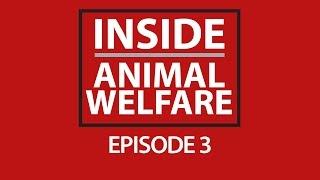 Inside Animal Welfare - Episode 3 Thumbnail