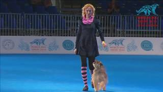 World Dog Show 2016 (день 4)