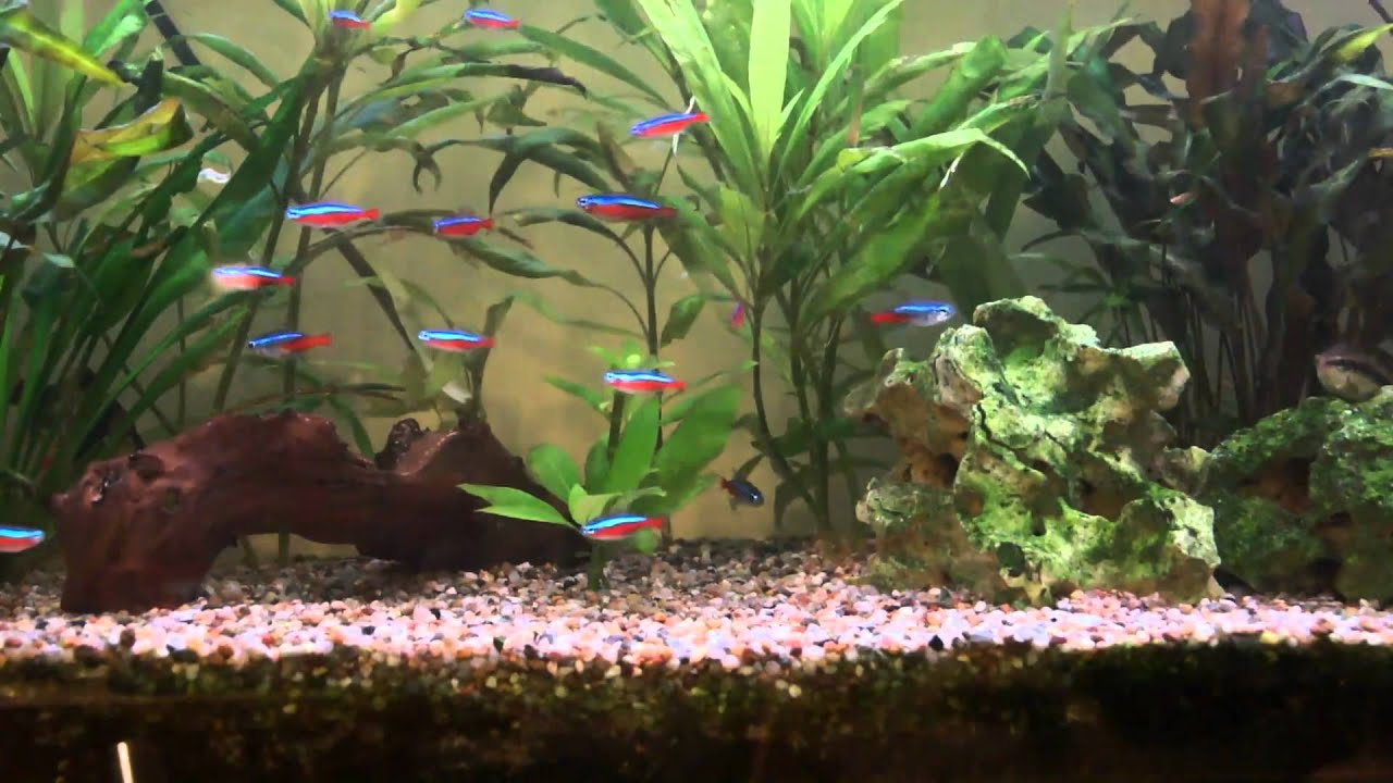 privates aquarium 120l teil 3 in hd youtube