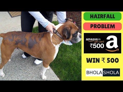 Pet Care - Dog Hairfall Problem - Bhola Shola