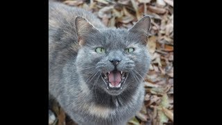 Its Time To Laugh - Mean Cats