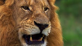 wild-lands-south-africa-with-hannah-stitfall-bbc-earth