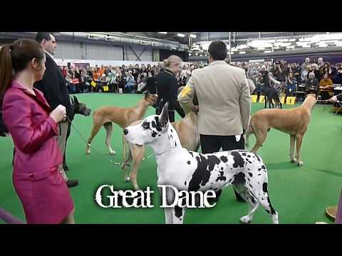 top 10 fastest dogs in the world 2017