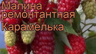 видео Красная малина - rubus idaeus / Агротехника выращивания малины / ПлантЭксперт - питомник ягодных культур