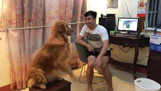 Ang Masunuring Aso #Lukie the Golden Retriever