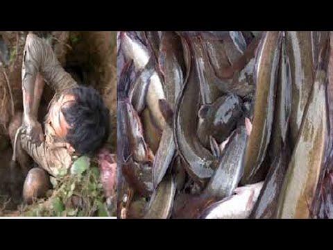 Chuyện Lạ Có Thật - Cá trê chui vào mộ ăn thịt người ,,nghe nổi da gà