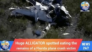 Today's World: Huge ALLIGATOR spotted eating the remains of a Florida plane crash victim