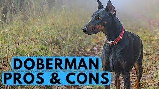 Doberman Pinscher Pros and Cons