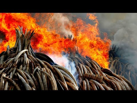 The Ivory Ban and the Antiques Trade - know the facts.