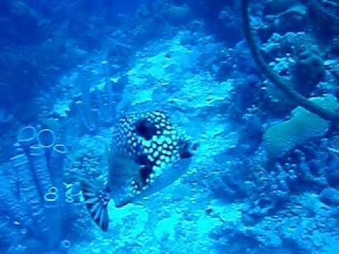 Snorkeling in Bonaire 2 - I tre fratellini scatoletta