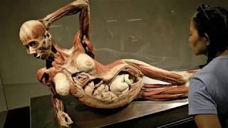 Where Do Plastinated Bodies in Body Worlds Exhibition Come From (Add OS)-update