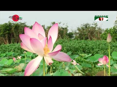 Nature And Life - Episode 293 (Waterlily & Lotus)