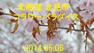 2014春 フラワーパラダイス 『北海道 北見市』