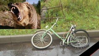 Нападение медведя на велосипедиста (поучительная история)