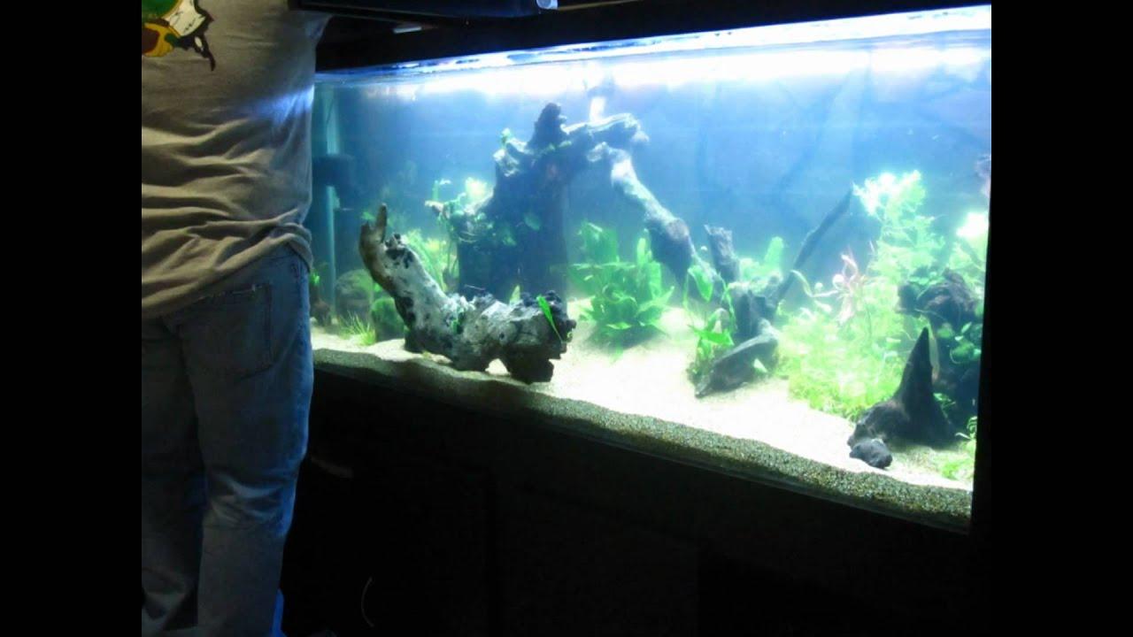 Dise o y venta de acuarios proyecto de peces disco en 600 - Peceras de diseno ...