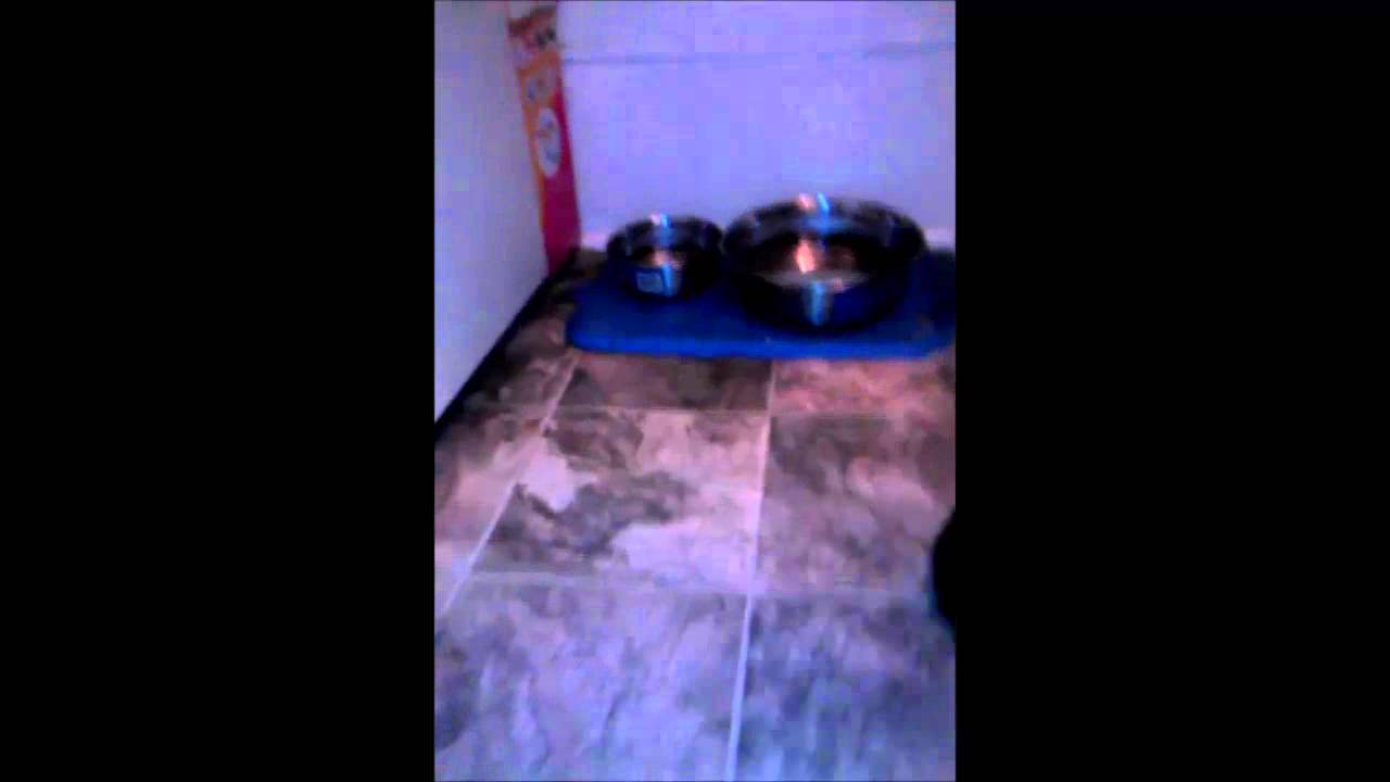 disharmonica kitty kaos official death metal cats music video youtube. Black Bedroom Furniture Sets. Home Design Ideas