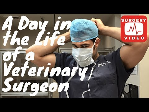 A Day in the Life of a Veterinary Surgeon